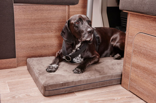 """""""4 paws"""" dog pillows for motor homes and caravans"""